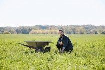 Young man kneeling in crop field next to wheelbarrow. — Stock Photo