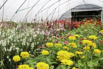 Polytunnel full of flowering plants in organic flower garden. — Stock Photo