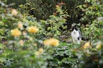 Gato sentado entre plantas no canteiro de flores de jardim. — Fotografia de Stock