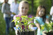 Pre-adolescent girl holding out tray of seedlings while gardening on farm with family. — Stock Photo