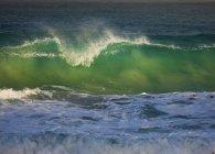 Kammwellen vor der Küste der Kap-Algen in Südafrika. — Stockfoto