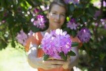 Woman holding large purple hydrangea blooms in garden. — Stock Photo
