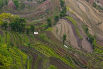 Hilly terraced rice fields with natural pattern in Yuanyang, China — Stock Photo