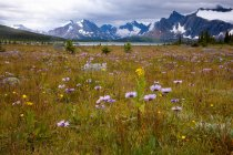 Flowery meadow and Canadian Rockies mountains in Jasper National Park, Alberta, Canada — Stock Photo