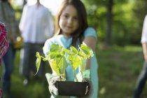 Vorpubertierendes Mädchen hält Tablett mit Setzlingen während Gartenarbeit auf Bauernhof mit Familie. — Stockfoto