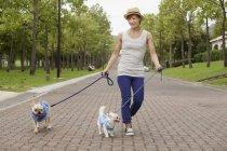 Femme qui marche deux chiens sur une voie pavée dans le parc. — Photo de stock