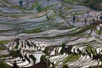 Luftaufnahme des terrassierten Reisfelder mit Wasser reflektiert Sonnenlicht in Yuanyang, China — Stockfoto