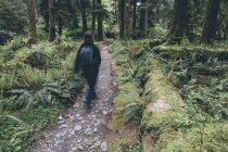 Blurred silhouette of female hiker walking on trail in temperate rain forest. — Stock Photo