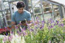 Молодой человек использует цифровую табличку в растительном питомнике, окруженном цветущими растениями . — стоковое фото