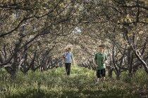 Padre con niños caminando en bosque túnel de general ramas de los árboles - foto de stock