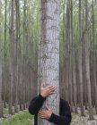 Обрезанное мнение человека, обнимая ствол дерева в плантации тополя — стоковое фото