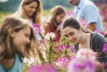 Family sitting among flowers at organic flower farm — Stock Photo