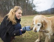 Young woman holding stick and playing with golden retriever dog. — Stock Photo