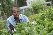 Young African American man working in garden. — Stock Photo
