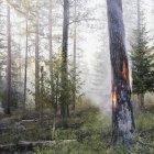 Brûlage contrôlé des conifères dans la forêt . — Photo de stock