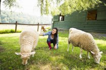 Woman stroking sheep grazing in paddock of farmhouse. — Stock Photo