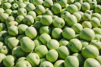 Зеленые аппликации Granny Smith, полная рама . — стоковое фото