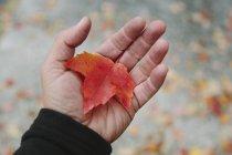 Maschio mano che tiene foglia d'acero autunnale . — Foto stock