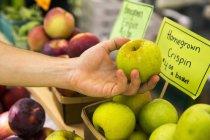 Крупным планом лицо рукой, выбирая яблоки на ферме стенд с признаками Цена — стоковое фото