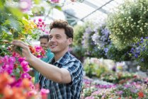 Two men deadheading flowers and checking hanging baskets in plant nursery. — Stock Photo
