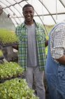 Young man holding trays of green seedlings in greenhouse. — Stock Photo