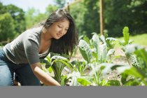 Young woman planting seedlings at traditional farm in countryside — Stock Photo