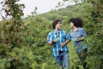 Couple walking and talking among blackberry bushes. — Stock Photo
