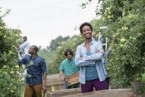 Mujer en la huerta con los brazos cruzados y el grupo de personas recogiendo las manzanas de los árboles - foto de stock