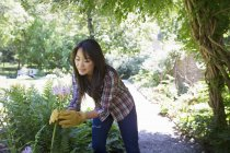 Young woman in protective gloves pruning vegetable plot on organic farm. — Stock Photo
