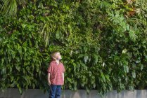 Boy looking up at green wall of climbing plants and foliage. — Stock Photo