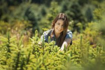 Woman clipping and pruning young conifer trees in plant nursery. — Stock Photo