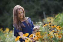 Pre-adolescent girl with basket picking flowers in field. — Stock Photo