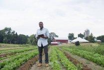 Человек осматривает салат с помощью цифровых плантаций на органических сельскохозяйственных полях . — стоковое фото