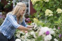 Giovane giardiniera che lavora in vivaio vegetale biologico . — Foto stock