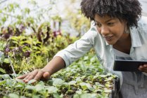 Mid adult woman inspecting plants with digital tablet at organic horticultural farm nursery. — Stock Photo