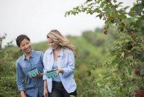 Deux femmes parlent et marchent parmi les mûriers avec des conteneurs de baies . — Photo de stock