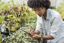 Mid femme adulte à l'aide de tablette numérique à la pépinière de la ferme horticole biologique. — Photo de stock