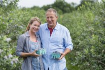 Mature man and woman holding containers with blueberries at organic farm. — Stock Photo