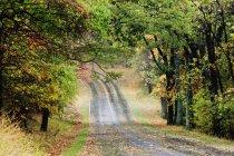 Straße durch herbstlichen Wald in Jungfräulichkeit, USA — Stockfoto