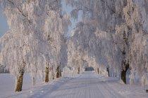 Chemin gelé à travers les arbres dans la campagne de l'Estonie — Photo de stock