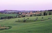 Montecchiello village and field at dawn, Tuscany, Italy — Stock Photo