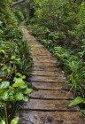 Деревянная дорожка через лесные растения — стоковое фото
