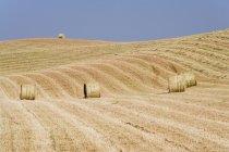 Уборные тюки сена в поле в Тоскане, Италия, Европа — стоковое фото