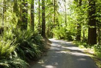 Road in sunny forest with ferns and plants in sunlight. — Stock Photo