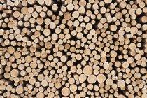 Struttura completa di tronchi di legno tagliati impilati — Foto stock
