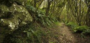 Sentiero sterrato nella lussureggiante foresta con rocce ricoperte di muschio — Foto stock