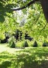 Corda altalena appeso al ramo d'albero — Foto stock