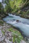 Размытый вид на каменистую ручейную воду в лесу — стоковое фото