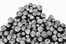 Épinettes fraîchement coupées, pruches et bûches de sapin empilées dans la forêt en noir et blanc — Photo de stock