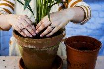 Sezione centrale e mani di donna ri-potting pianta in vaso di terracotta . — Foto stock